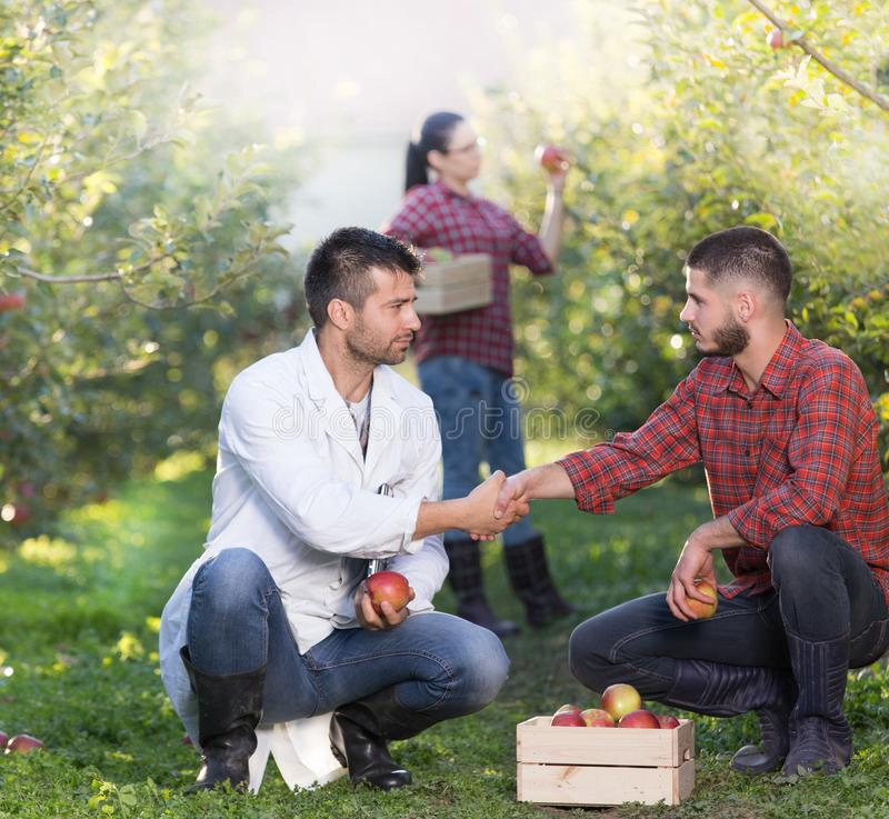 People shaking hands in orchard. Agronomist and farmer shaking hands in apple orchard with crate full of fruits beside them stock images