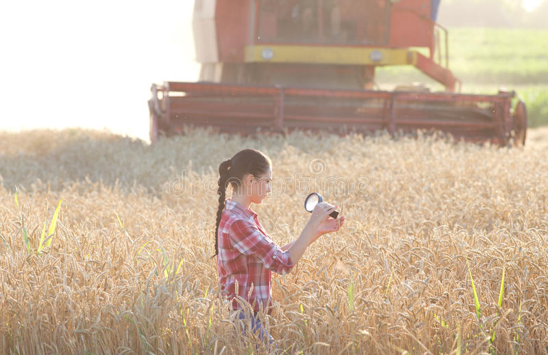 Agronomist in the field. Young woman agronomist looking at wheat ears with magnifier, combine harvester in background stock photos