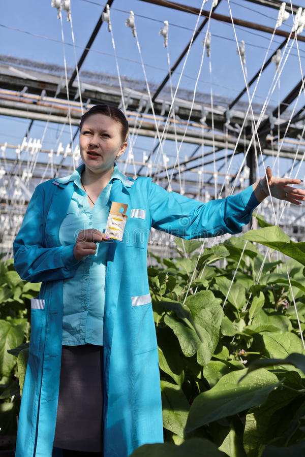 Download Agronomist With Lettuce In A Greenhouse Editorial Photo - Image: 93286796