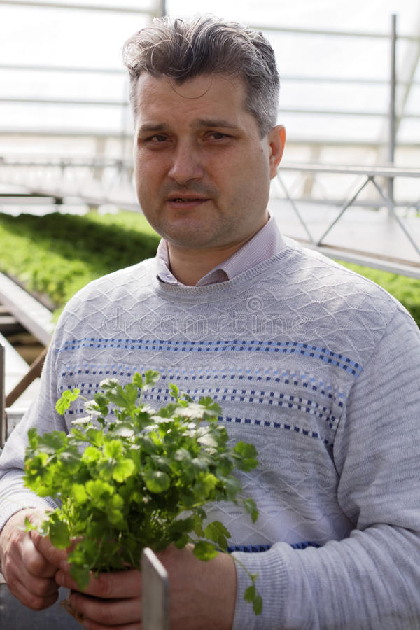 Download Agronomist With Lettuce In A Greenhouse Editorial Stock Photo - Image: 93286723