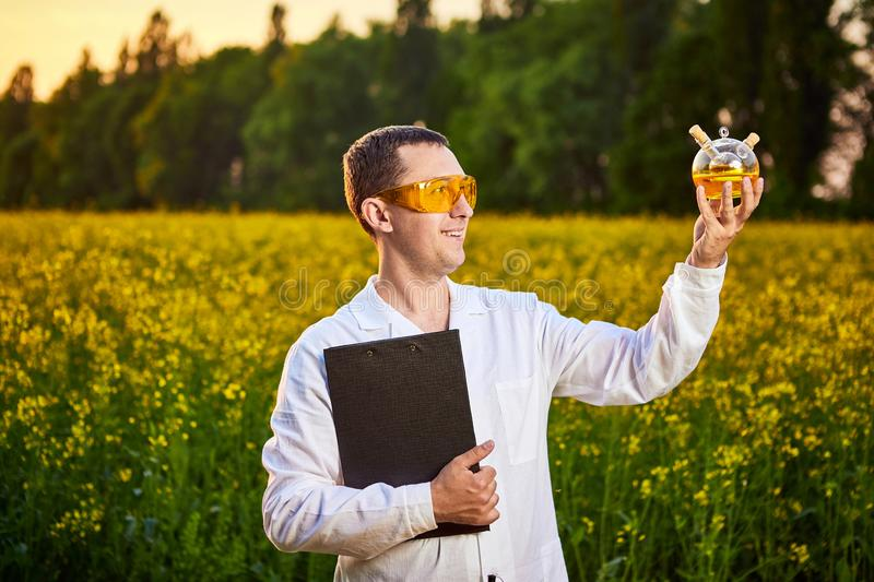 Agronomist man or farmer examine rapeseed oil using tablet on the background of  blossoming rape canola field. Agronomist man or farmer examine rapeseed oil royalty free stock image