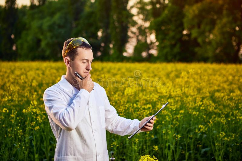 Agronomist man or farmer examine rapeseed oil using tablet on the background of  blossoming rape canola field. Agronomist man or farmer examine rapeseed oil stock photos