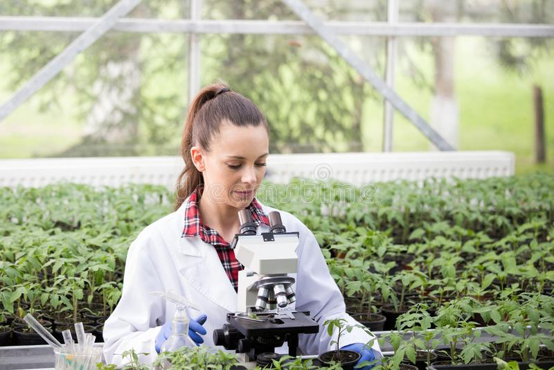 Agronomist with microscope in greenhouse. Young pretty woman agronomist in white coat sitting at microscope and supervising seedling`s growth in greenhouse stock photo