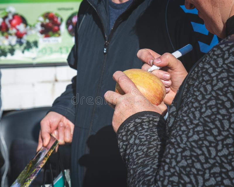 The agronomist selects the apple variety royalty free stock photo