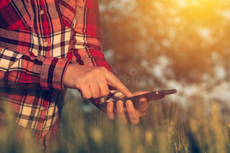 Agronomist using smart phone mobile app to analyze crop development. Female hands with mobile phone in cultivated wheat field stock images