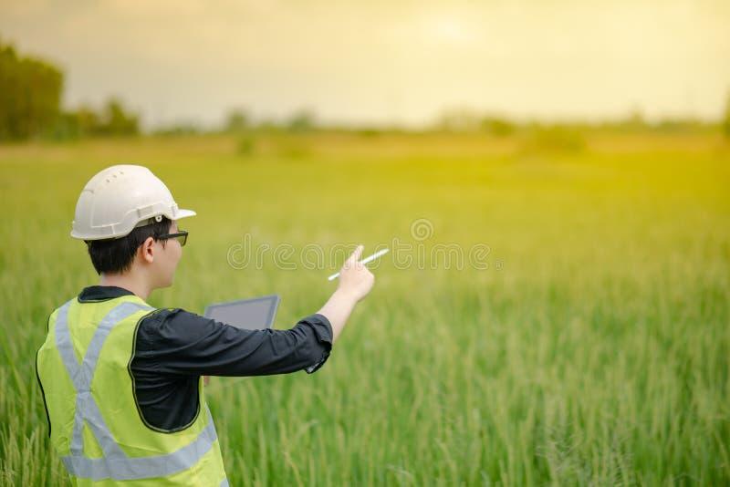 Agronomo maschio asiatico osservando sul giacimento del riso fotografia stock