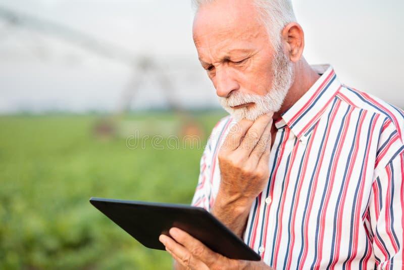 Agronomo o agricoltore senior serio che contempla mentre facendo uso di una compressa nel giacimento della soia Impianto di irrig fotografia stock