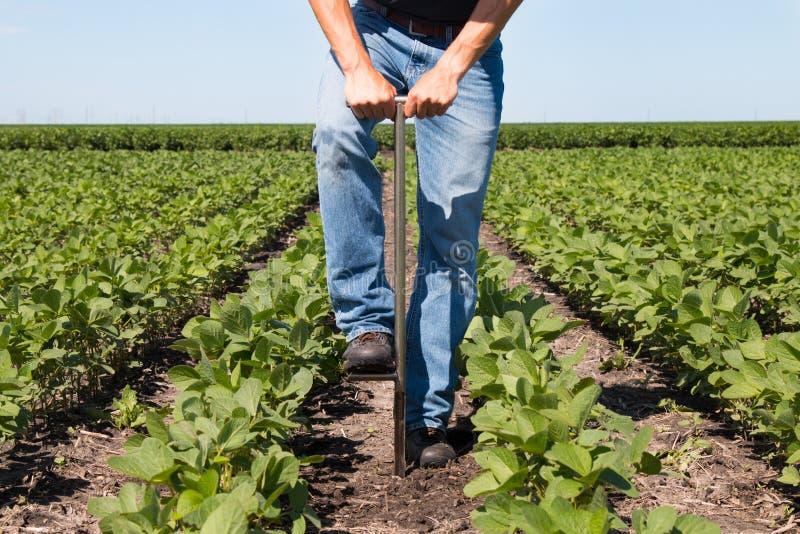 Agronomo Using una compressa in un campo agricolo fotografia stock