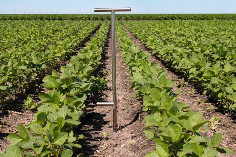 Agronomo Using una compressa in un campo agricolo immagini stock libere da diritti