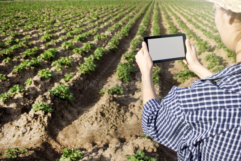 Agronoom die een digitale tablet op een landbouwgebied gebruiken stock fotografie