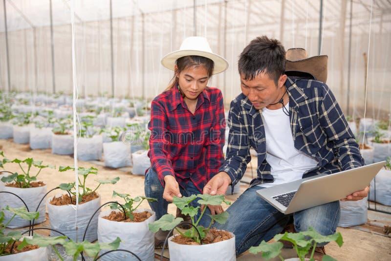 Agronoom die installatie op meloengebied, Paarlandbouwer en onderzoeker onderzoeken die meloeninstallatie analyseren royalty-vrije stock afbeelding