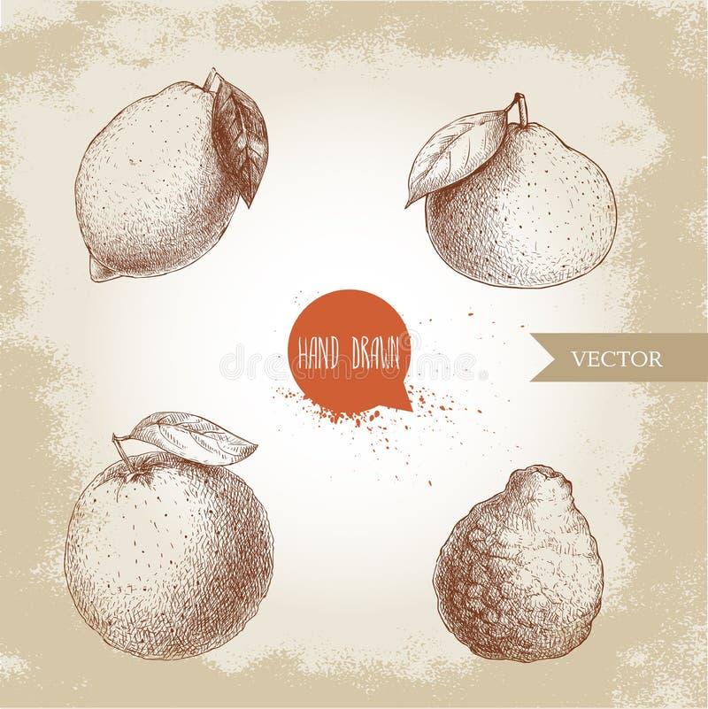 Agrumes tirés par la main de style de croquis réglés Fruits entiers de citron, de chaux, de mandarine, de mandarine, d'orange et  illustration stock