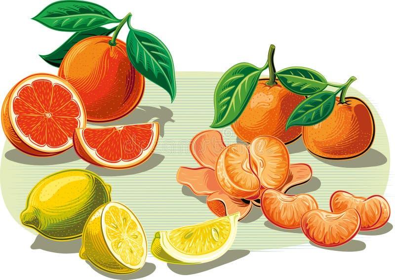 Agrumi: arance, mandarini e limoni royalty illustrazione gratis