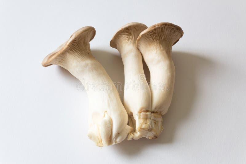 Agrupamento do rei Trumpet Mushrooms do eryngii do Pleurotus, o isolado imagem de stock