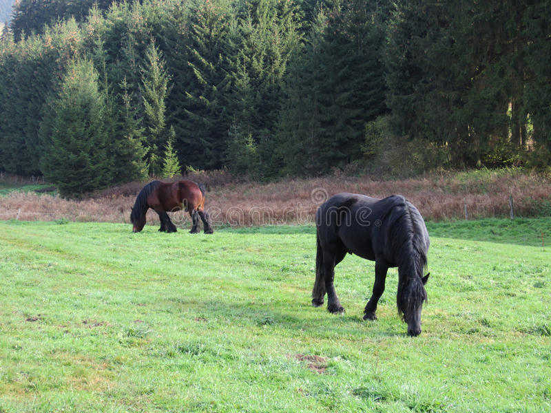 Agrupando cavalos fotos de stock
