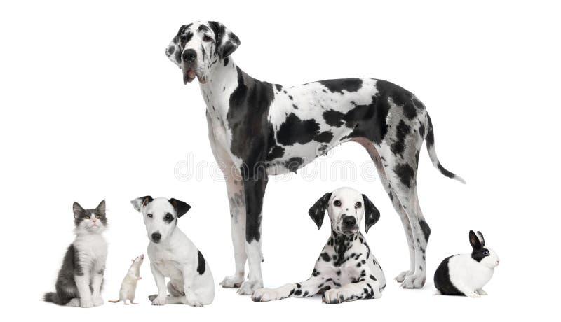 Agrupe o retrato de animais preto e branco foto de stock royalty free