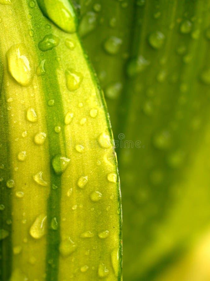 Agua 06 de la gota imagen de archivo libre de regalías