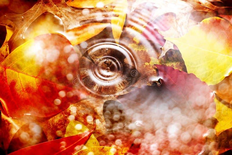 Download Agua Autumn Background De Las Hojas Imagen de archivo - Imagen de colorido, fondo: 41912179