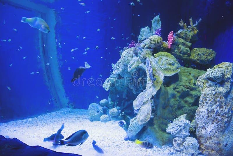 Agua azul en acuario marino con los pescados y los corales imagenes de archivo
