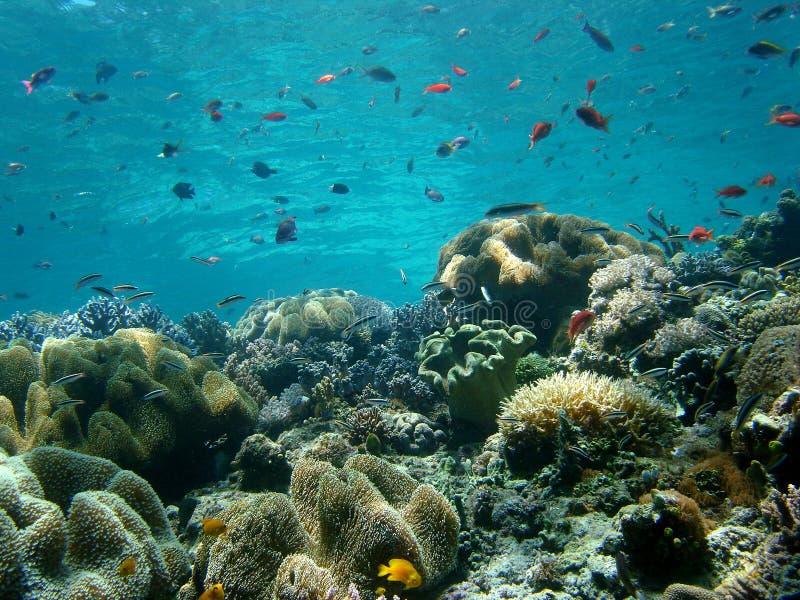 Agua azul, filón coralino foto de archivo