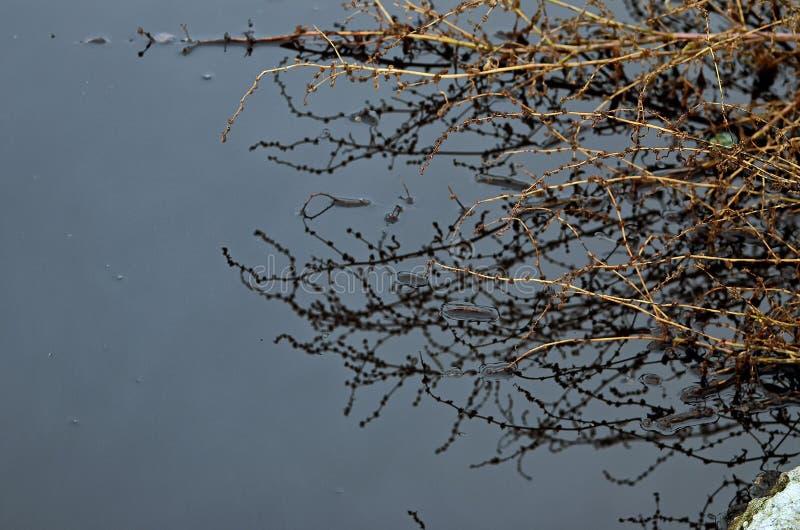 Agua, cielo e hierba foto de archivo