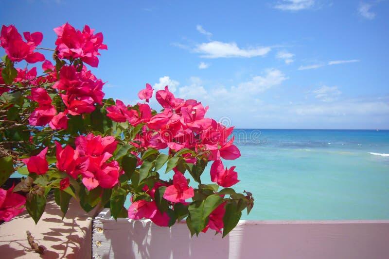 Agua, cielo y flores imágenes de archivo libres de regalías