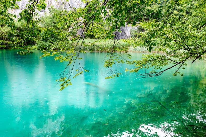 Agua clara de los lagos Plitvice, Croacia fotos de archivo libres de regalías