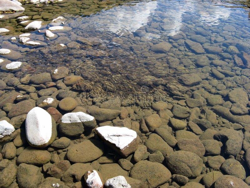 Agua clara en el río con muchos pescados subacuáticos Fondo salvaje de la naturaleza Parte inferior de lago imagen de archivo
