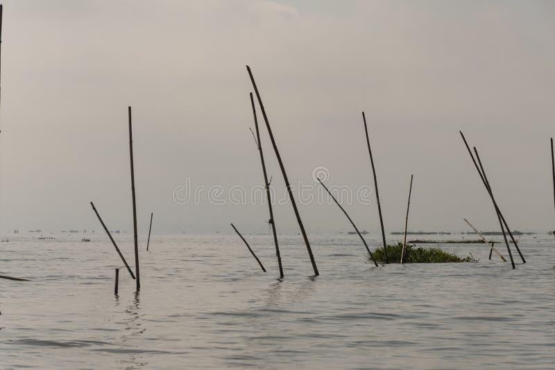 Agua con las cañas en un lago foto de archivo libre de regalías