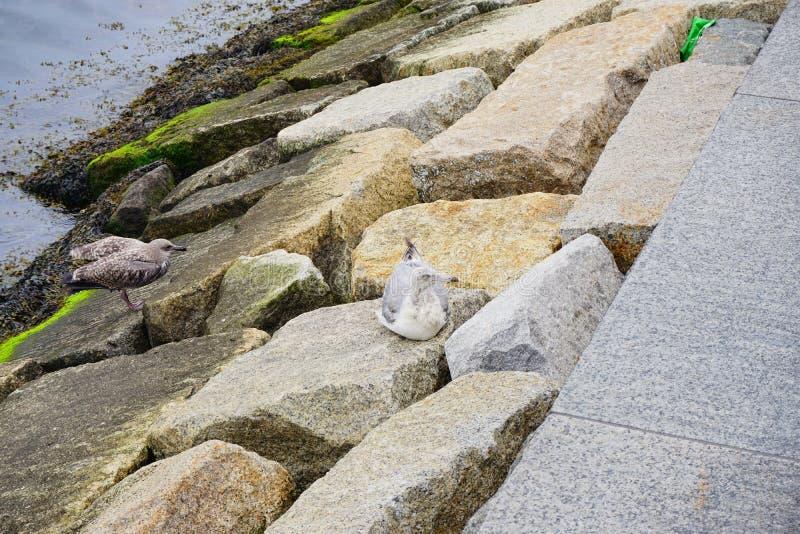 Agua contaminada y pájaro imagen de archivo libre de regalías