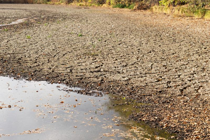 Agua de disminución y sequía en la charca fotografía de archivo