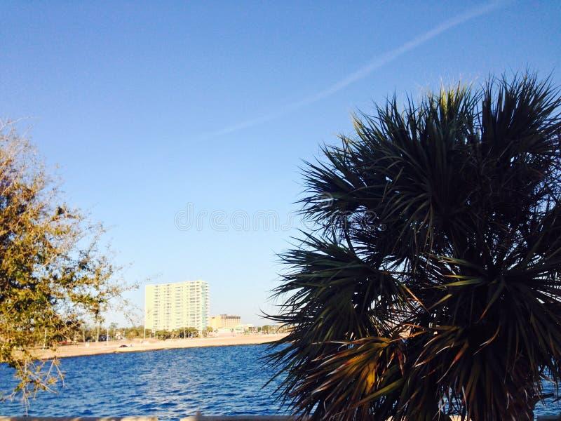 Agua de la palmera foto de archivo libre de regalías