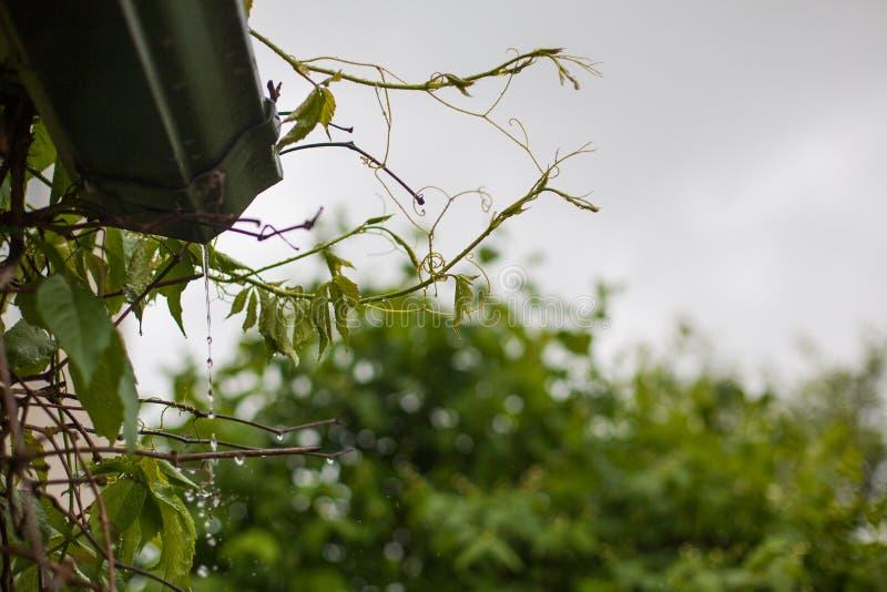 Agua de lluvia que vierte de un canal sobre vid foto de archivo