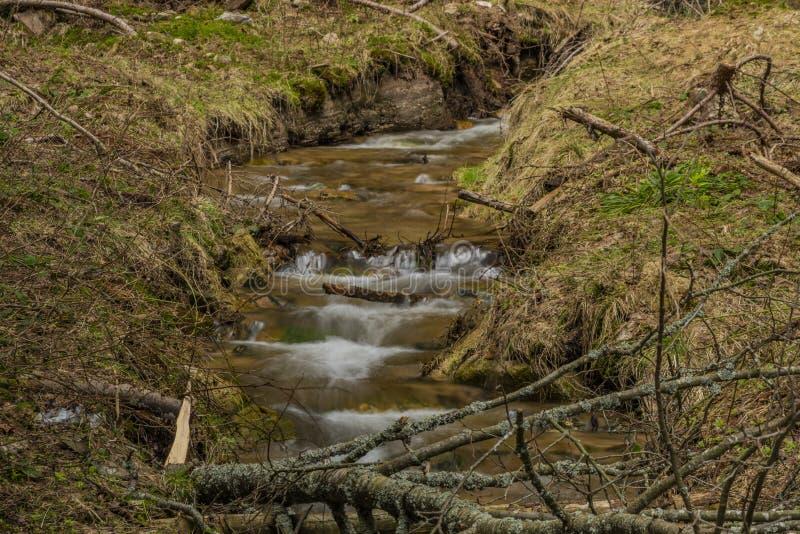 Agua de manatial grande en cala agradable en día de primavera en las montañas de Krusne fotografía de archivo