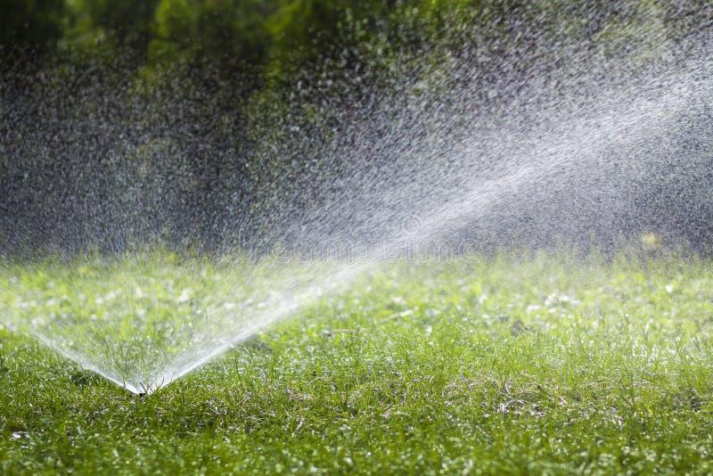 Agua de rociadura de la regadera del agua del césped sobre hierba en jardín en un día de verano caliente Céspedes de riego automá fotos de archivo libres de regalías