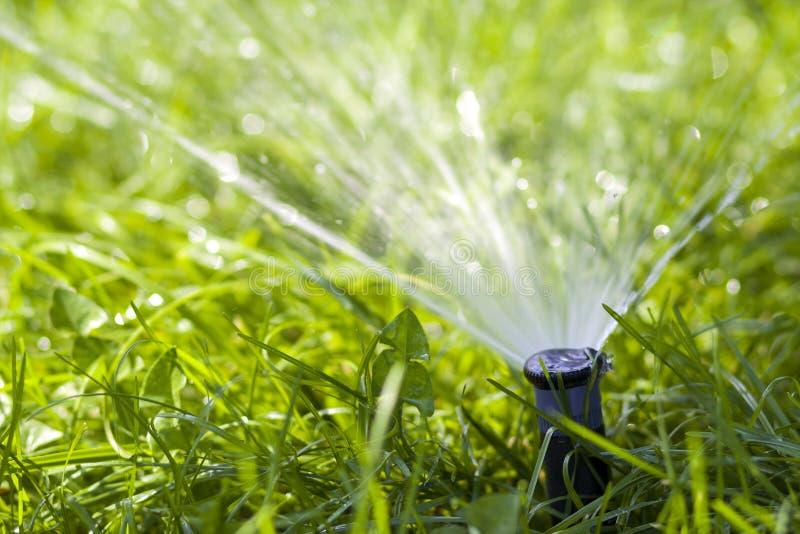 Agua de rociadura de la regadera del agua del césped sobre hierba en jardín en un día de verano caliente Céspedes de riego automá fotografía de archivo libre de regalías
