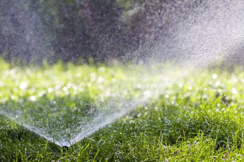 Agua de rociadura de la regadera del agua del césped sobre hierba en jardín en un día de verano caliente Céspedes de riego automá fotos de archivo