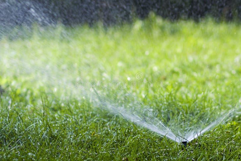 Agua de rociadura de la regadera del agua del césped sobre hierba en jardín en un día de verano caliente Céspedes de riego automá imagenes de archivo