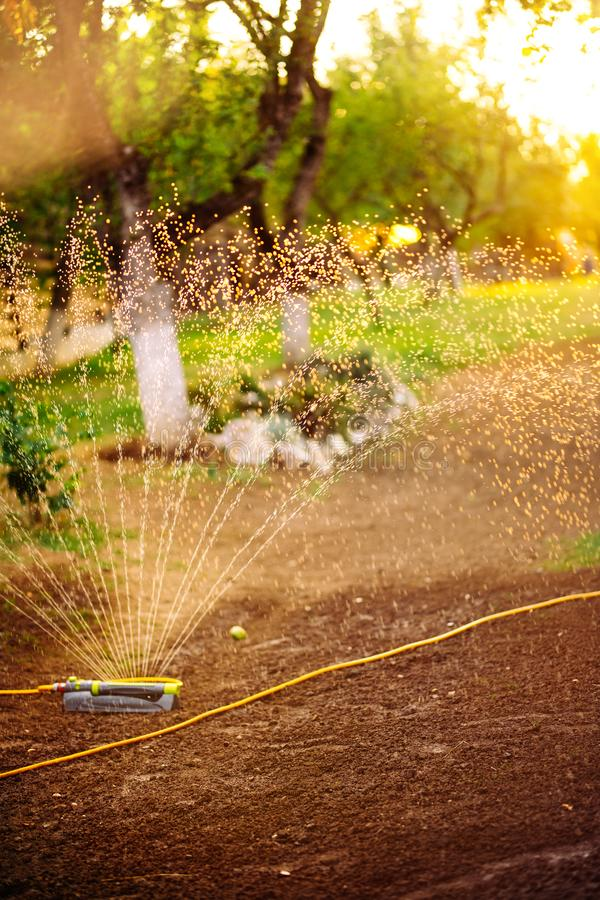Agua de rociadura de la regadera del césped sobre hierba en una tarde del verano fotos de archivo