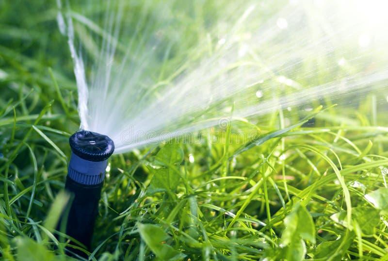 Agua de rociadura de la regadera del agua del césped sobre hierba fresca del verde del césped en jardín o patio trasero en día de imágenes de archivo libres de regalías