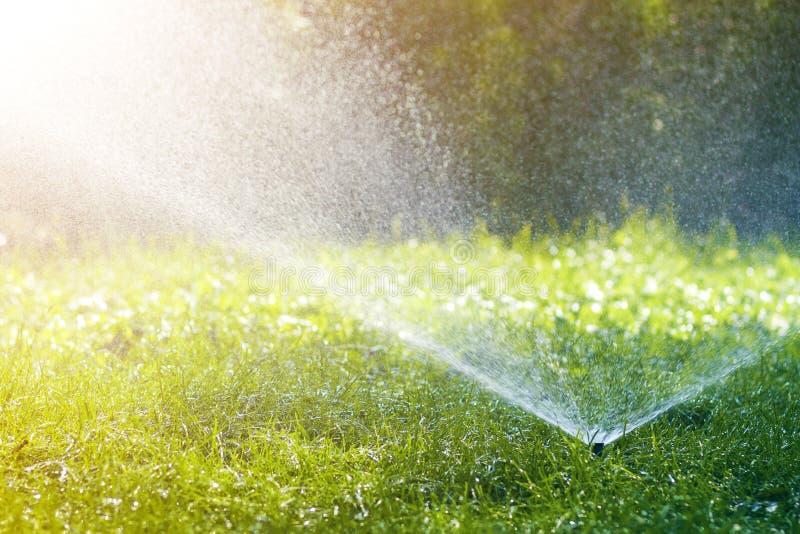 Agua de rociadura de la regadera del agua del césped sobre hierba fresca del verde del césped en jardín o patio trasero en día de foto de archivo