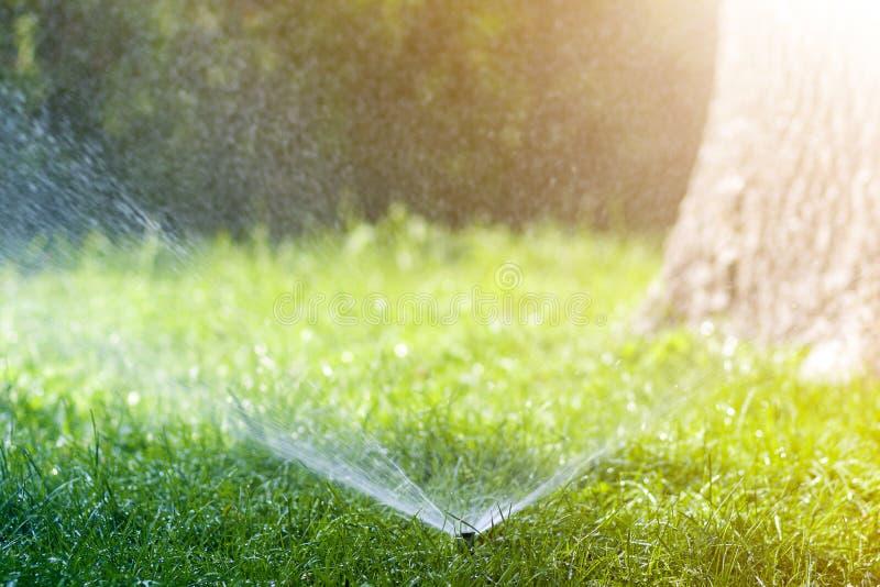 Agua de rociadura de la regadera del agua del césped sobre hierba fresca del verde del césped en jardín o patio trasero en día de foto de archivo libre de regalías