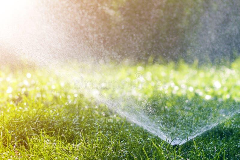 Agua de rociadura de la regadera del agua del césped sobre hierba fresca del verde del césped en jardín o patio trasero en día de fotos de archivo