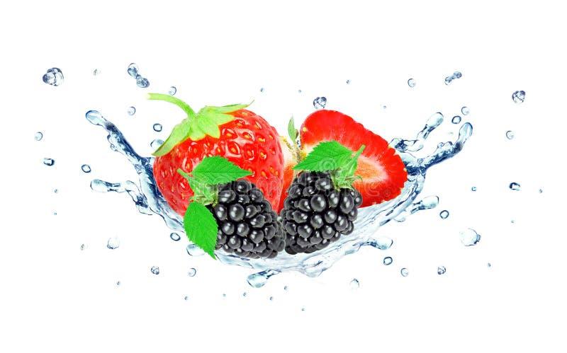 Agua del chapoteo de la fresa y de la zarzamora imagen de archivo