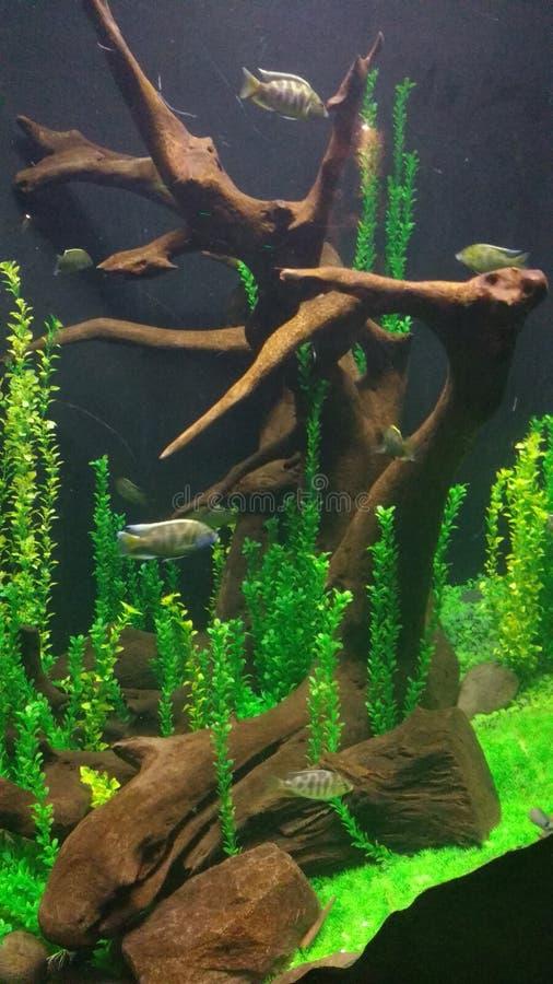 Agua EL bajo Peces/ζωηρόχρωμη ωκεάνια ζωή στοκ φωτογραφίες