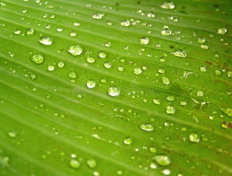Agua en las hojas 1 fotografía de archivo libre de regalías