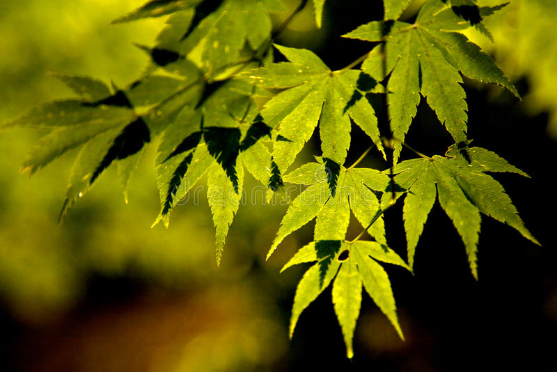 Agua en las hojas por la mañana foto de archivo libre de regalías