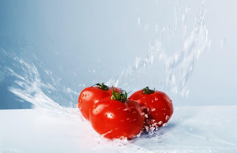Agua lanzada tomates jugosos imagen de archivo libre de regalías