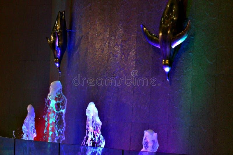 Agua ligera de Delfina fotografía de archivo libre de regalías