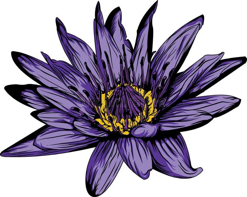 Agua Lily Flower imagenes de archivo